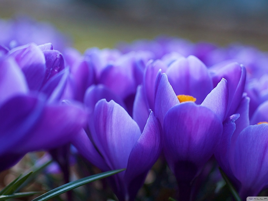 920x520 Spring Flowers Macro Google Cover Photo