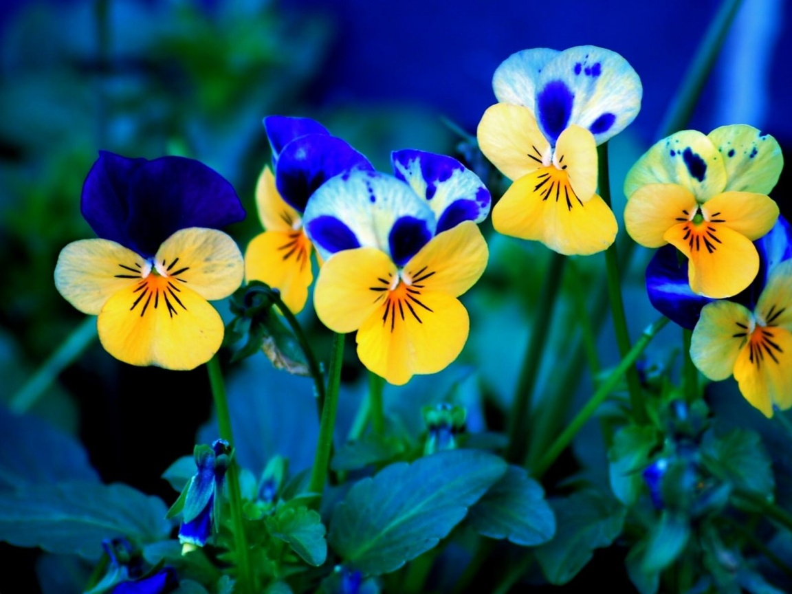 spring flowers background you - photo #27