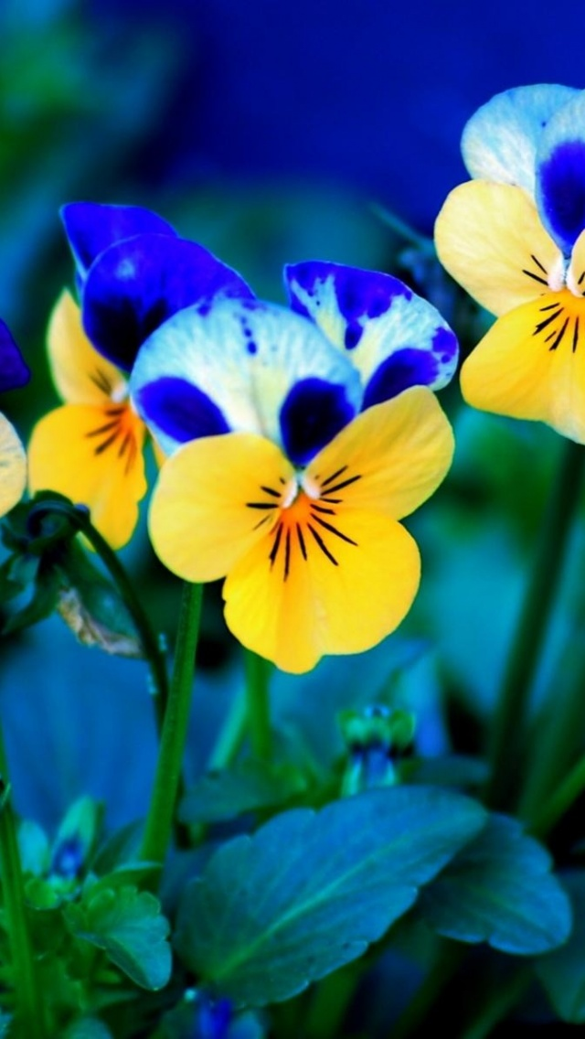 640x1136 Spring Flowers Desktop PC And Mac Wallpaper