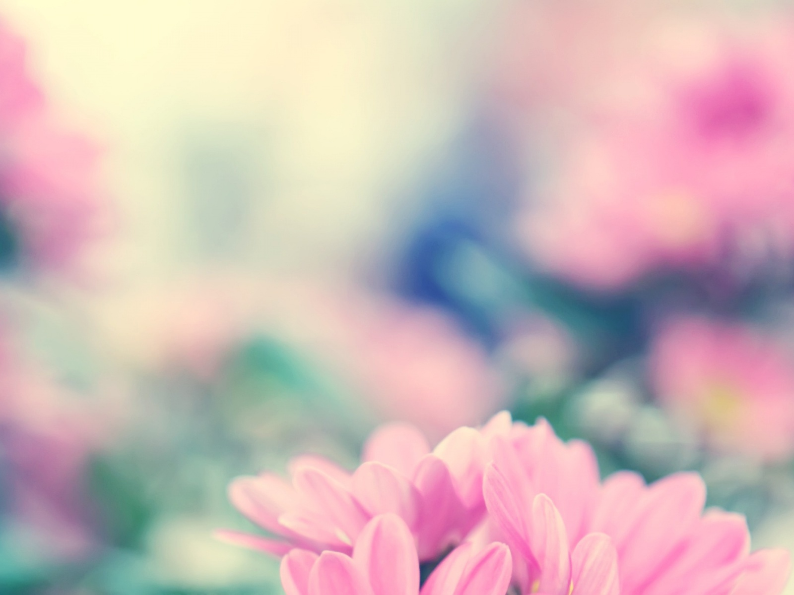 1500x500 Spring Flowers Twitter Header Photo