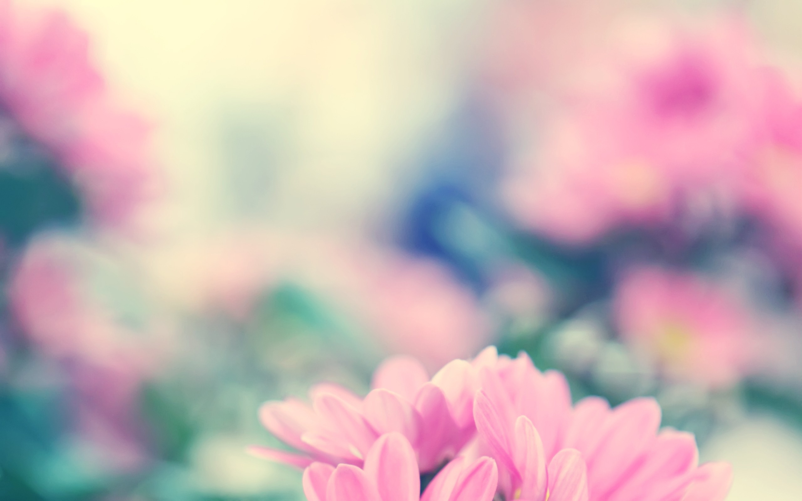 2560x1440 Spring Flowers Youtube Channel Cover