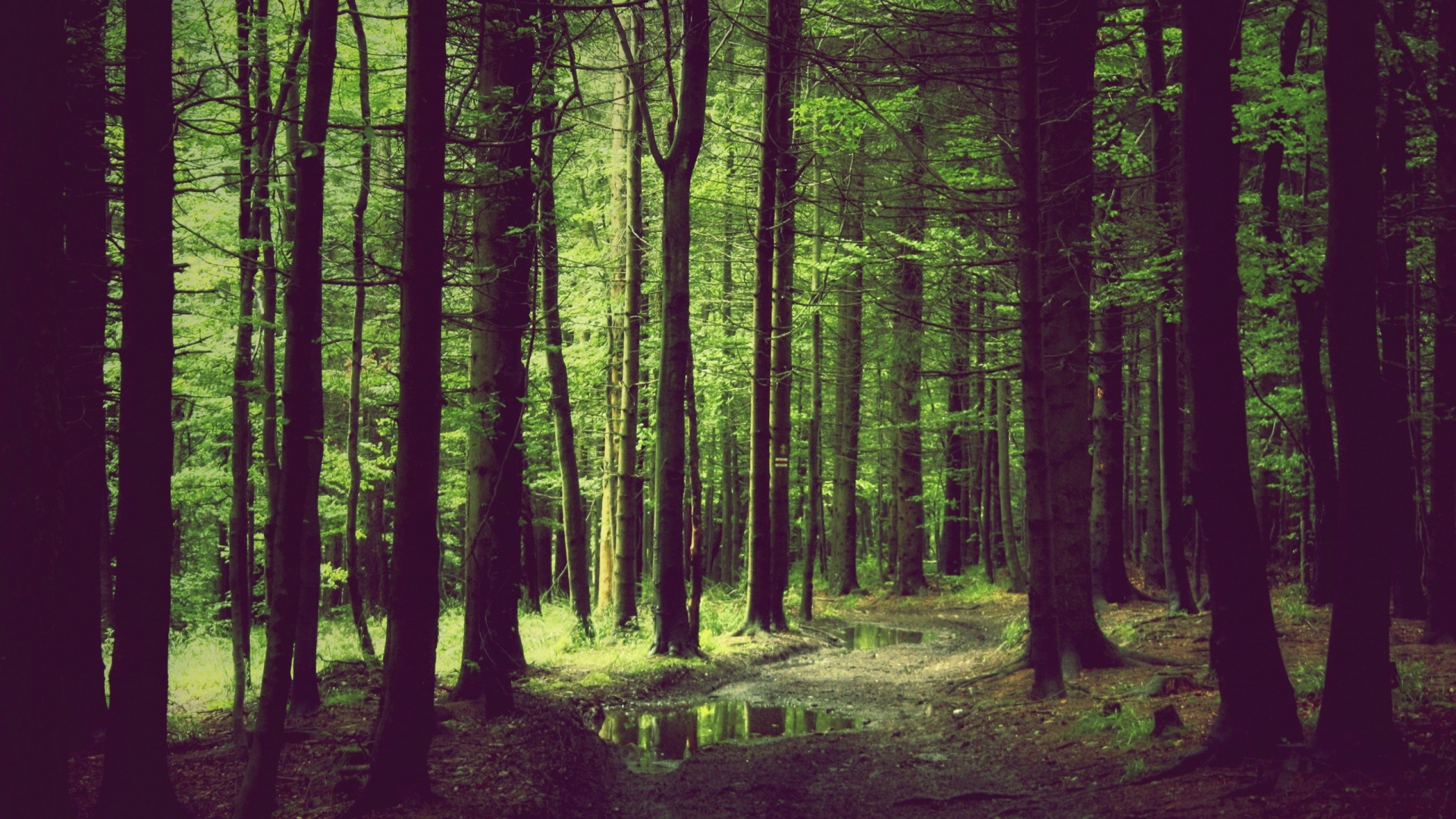 1920x1080 spring forest desktop pc and mac wallpaper