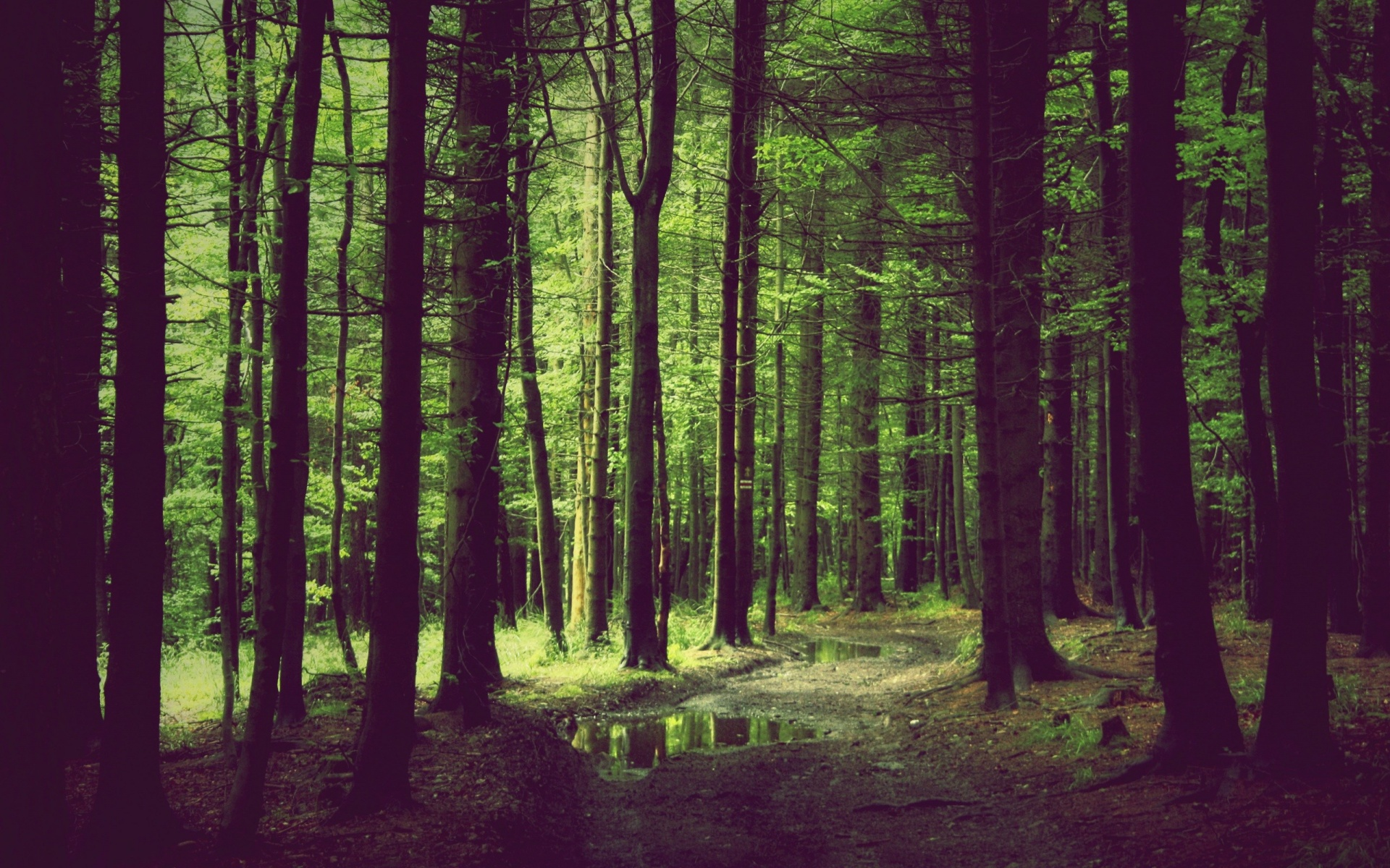 Cool Wallpaper Mac Forest - spring-forest_wallpapers_36412_1920x1200  Trends_169663.jpg