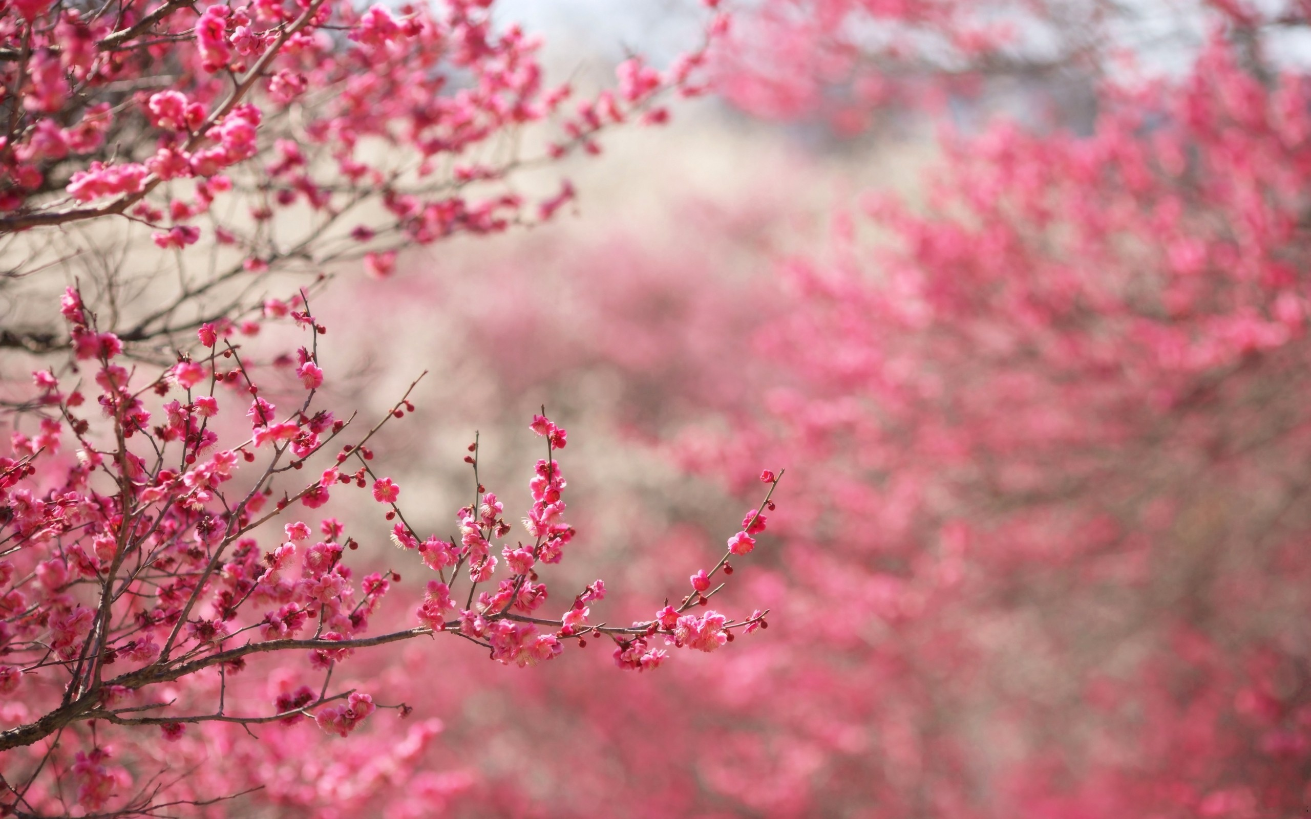 Image: Spring in pink wallpapers and stock photos. «