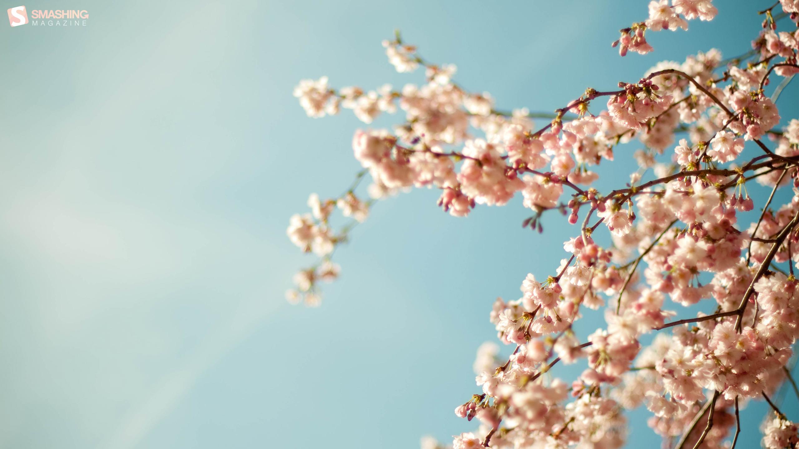 spring is here wallpapers 28068 2560x1440