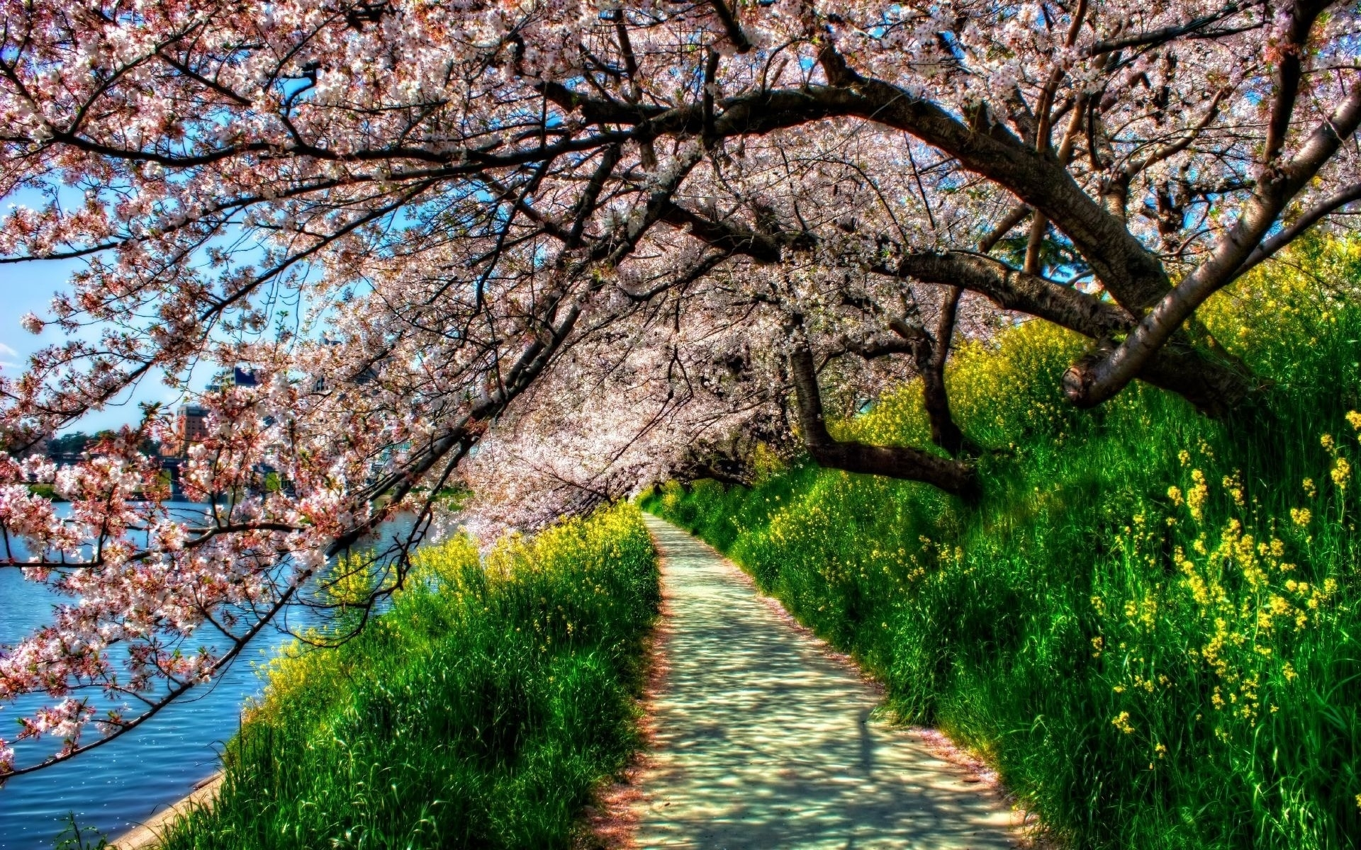 spring trees background - photo #33