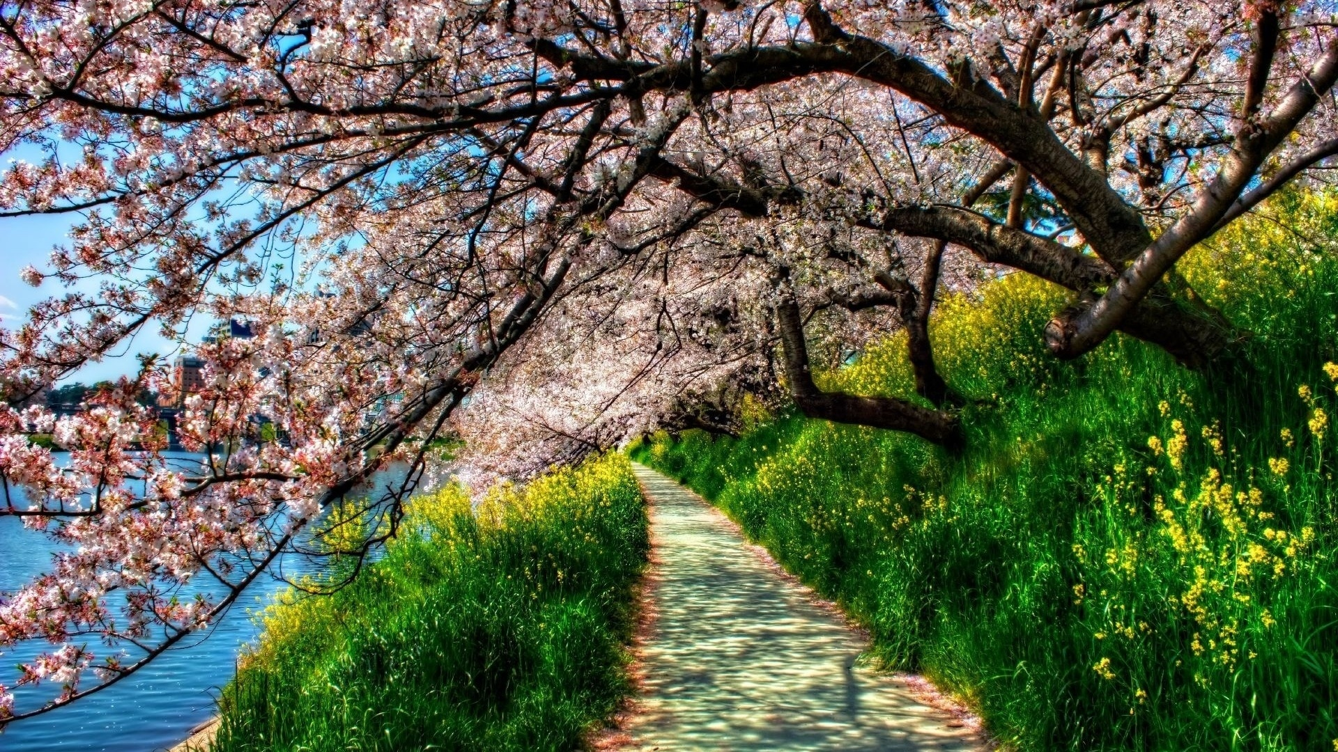 1920x1080 Spring Trees Grass Lake Way Desktop PC And Mac Wallpaper