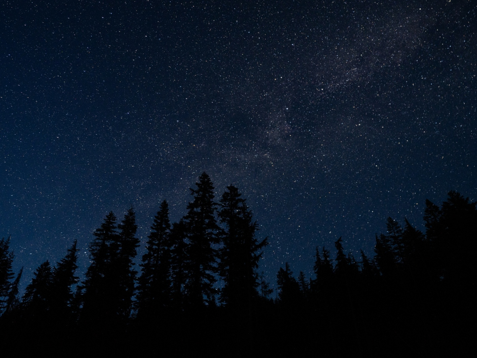 1600x1200 starry sky, trees, night, radi