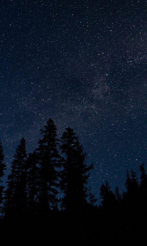 480x800 starry sky, trees, night, radi