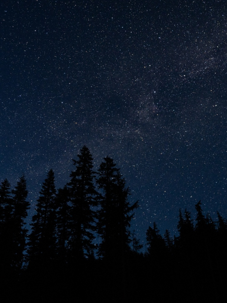 768x1024 starry sky, trees, night, radi