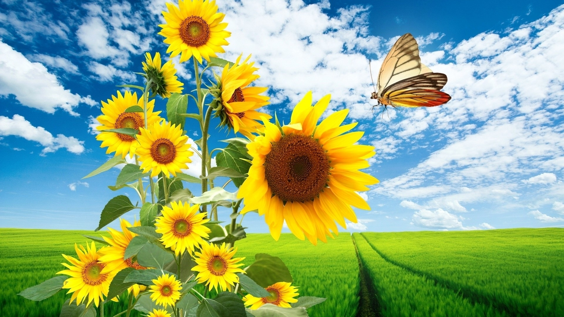 1920x1080 Sun Flowers Butterfly & Nature