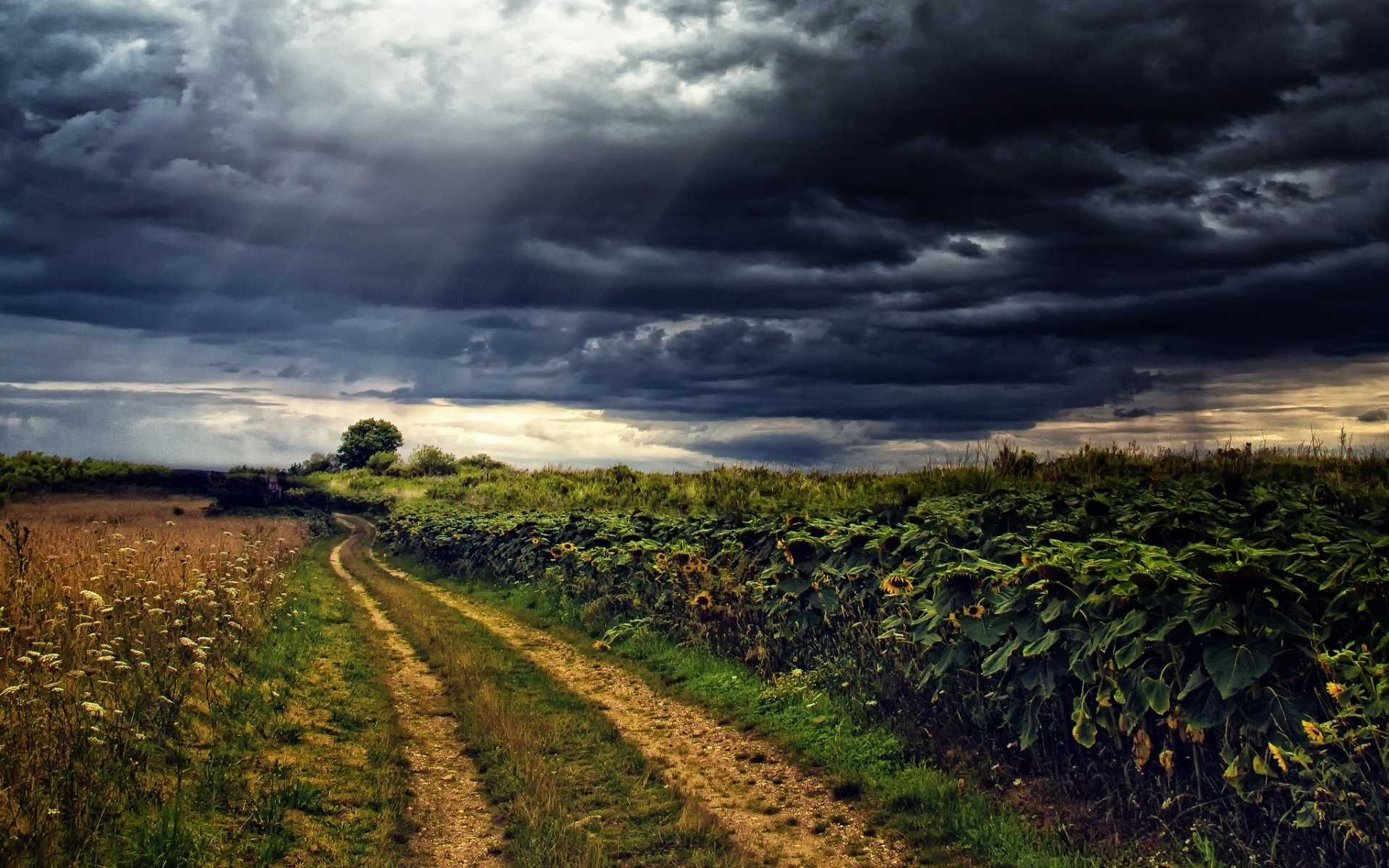 sun flowers path stormy sky wallpapers sun flowers path
