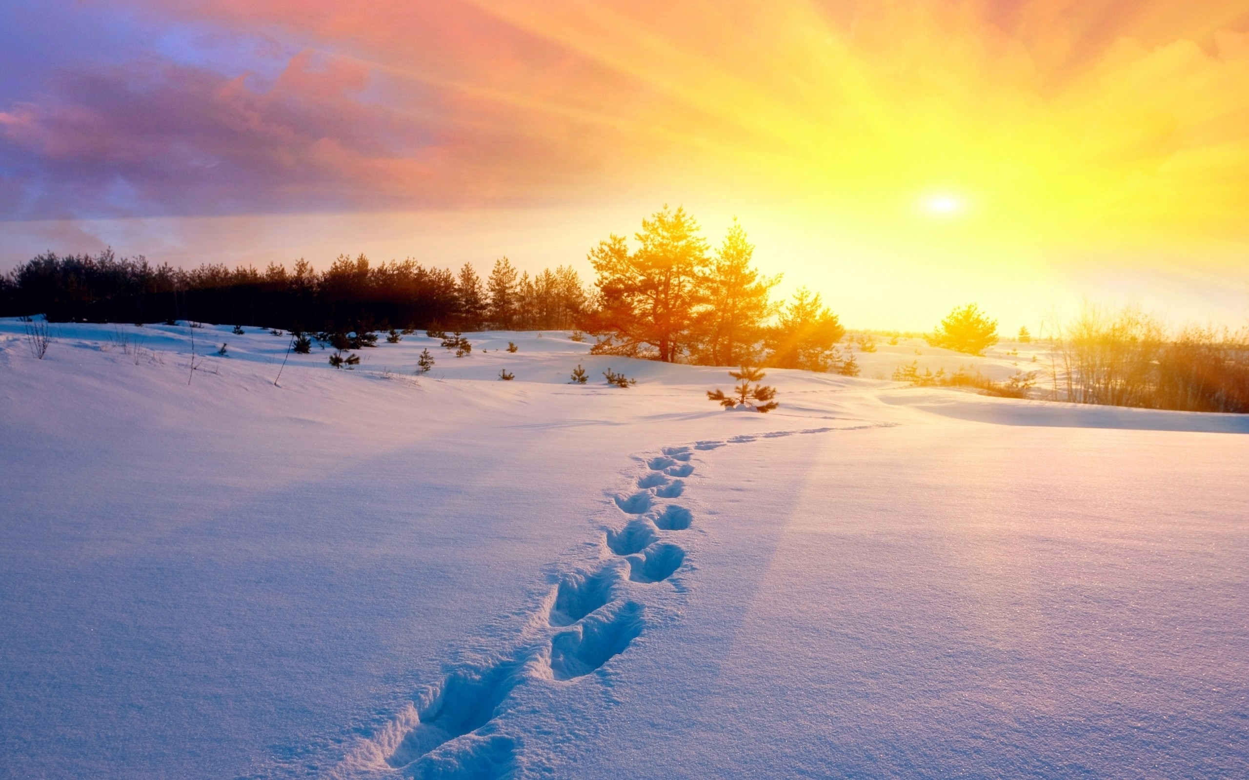 Sun Trees Snow & Foot Step Wallpapers