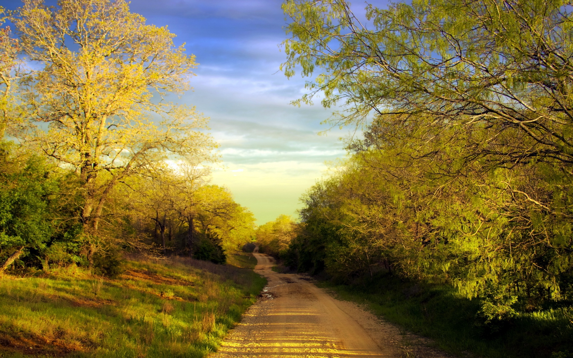 sunny forest grass amp road wallpapers sunny forest grass