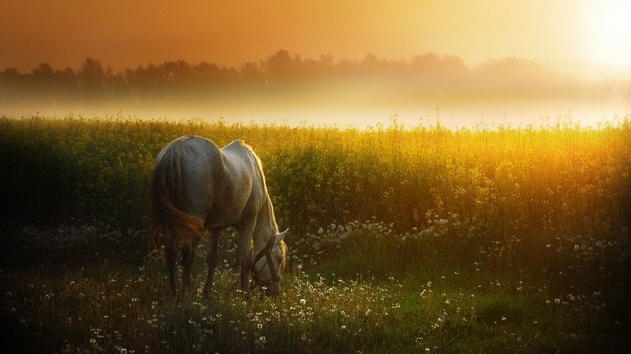 download wallpaper horses sunset - photo #1