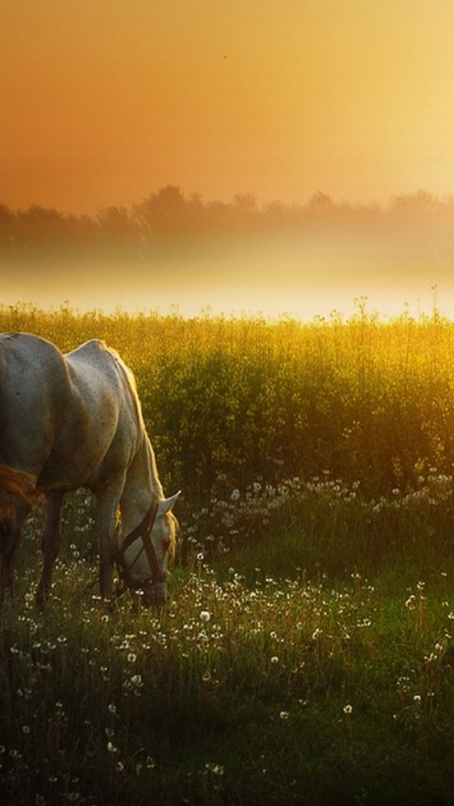 640x1136 Sunset Meadow White Horse Iphone 5 Wallpaper