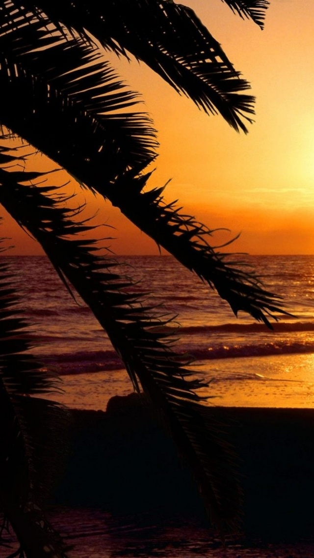 640x1136 Sunset Palm Beach Florida Iphone 5 Wallpaper