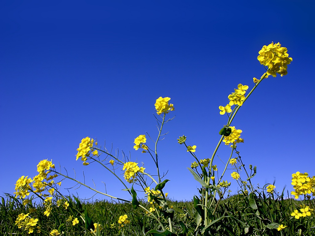 wallpaper sky under flowers - photo #26