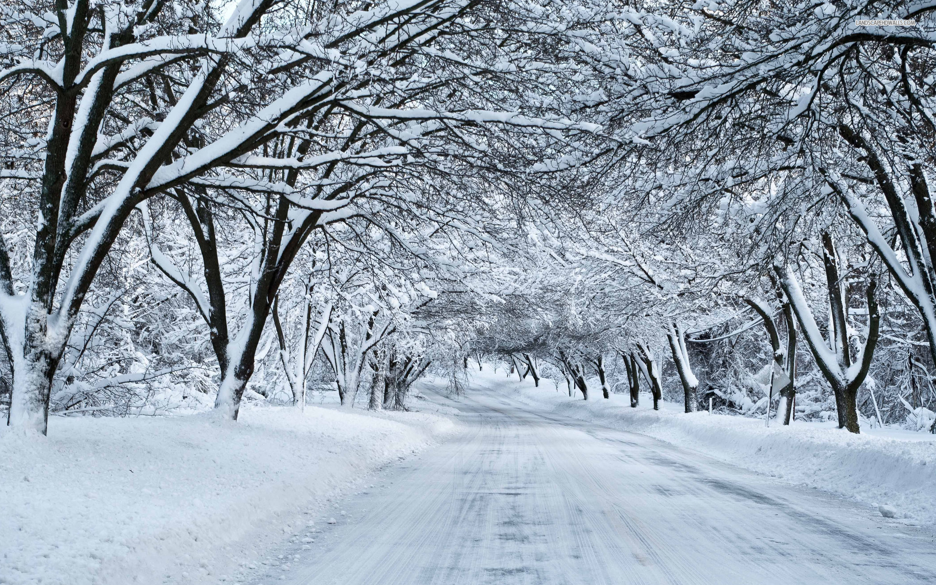 thick snowy trees amp white road wallpapers thick snowy