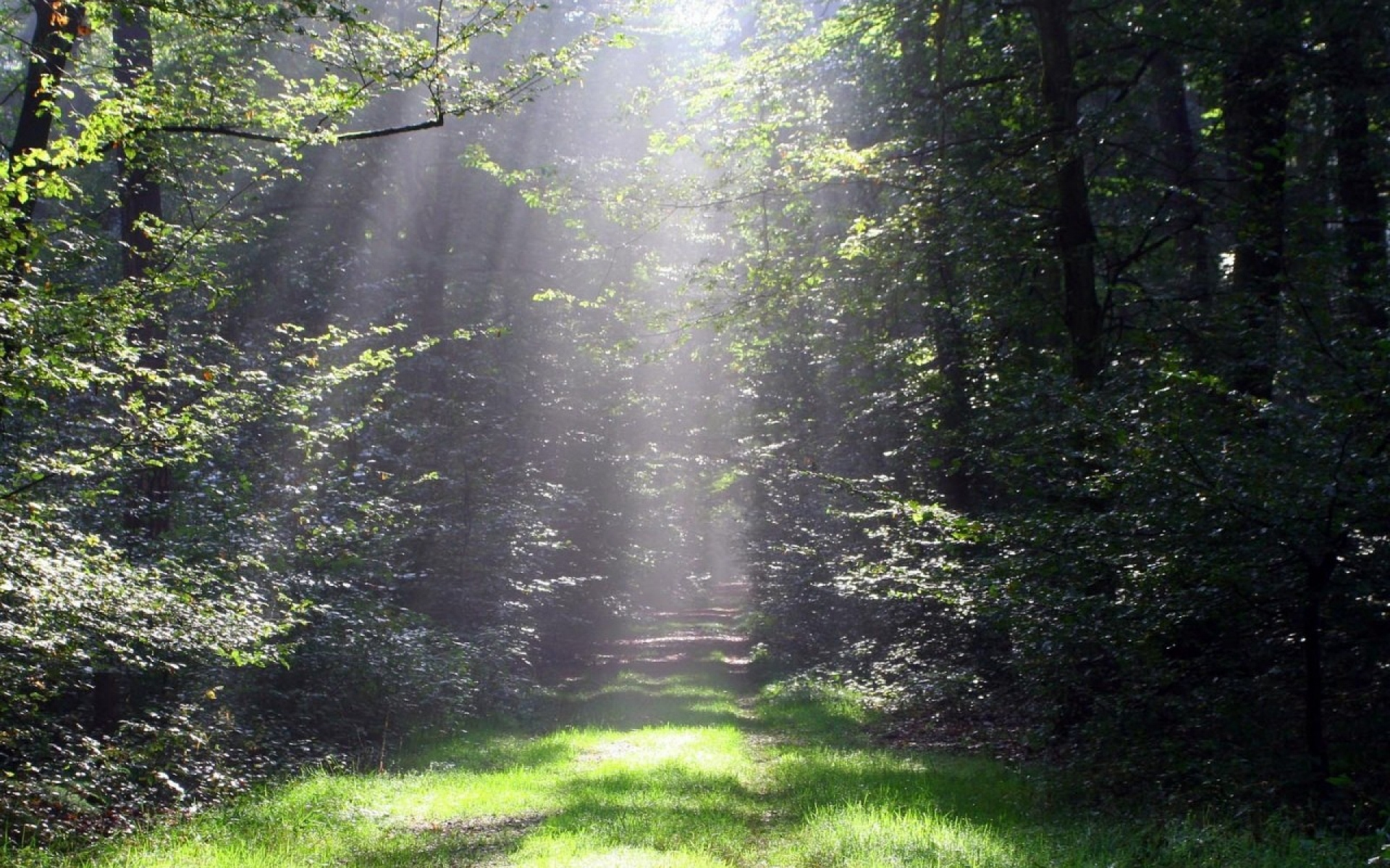 thicket sunny wood path grass wallpapers