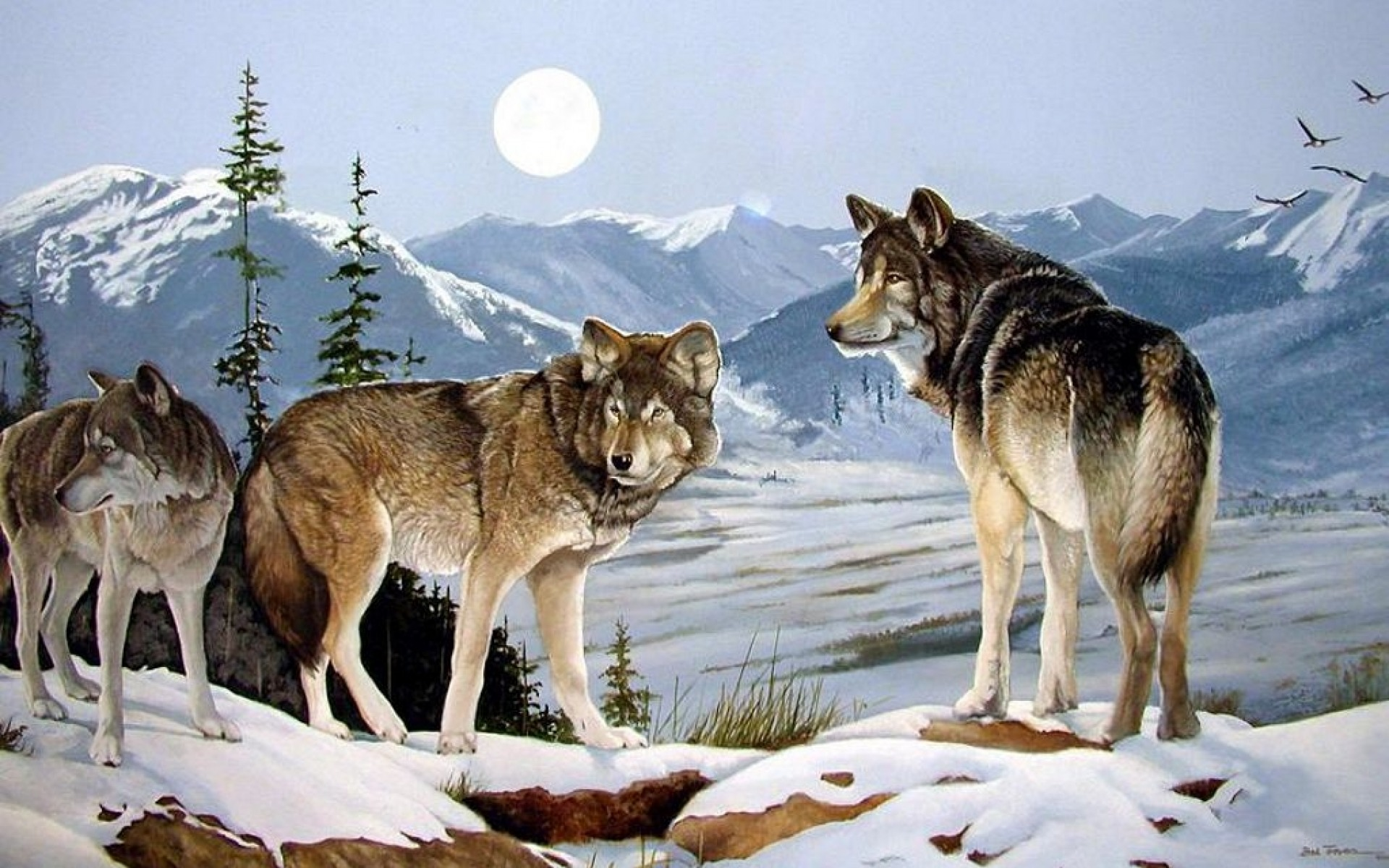 Three Wolves Peaks Winter Moon Wallpapers Three Wolves