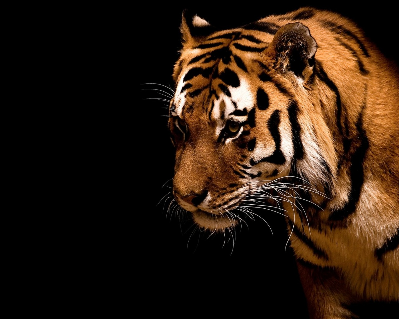1280x1024 Tiger,  backrounds, walls