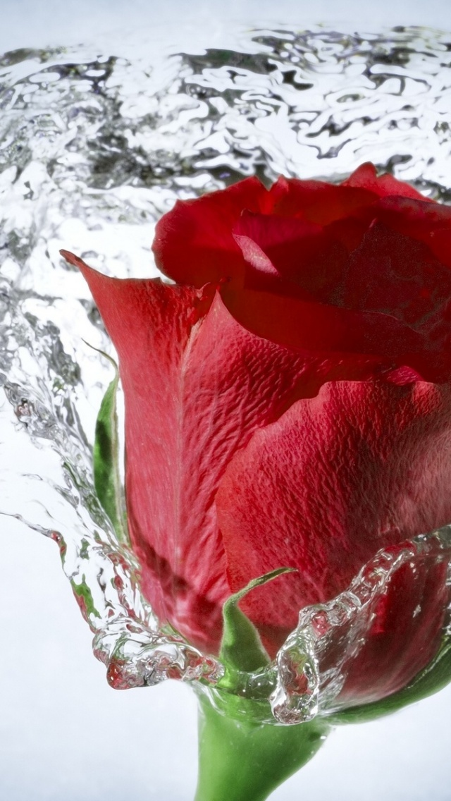 640x1136 time lapse water drops rose iphone 5 wallpaper