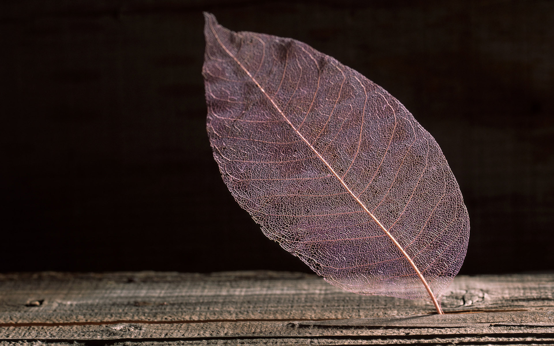 1920x1200 Transparent Leaf desktop wallpapers and stock photos