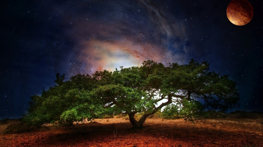 825x315 Tree Space Planet Stars Night
