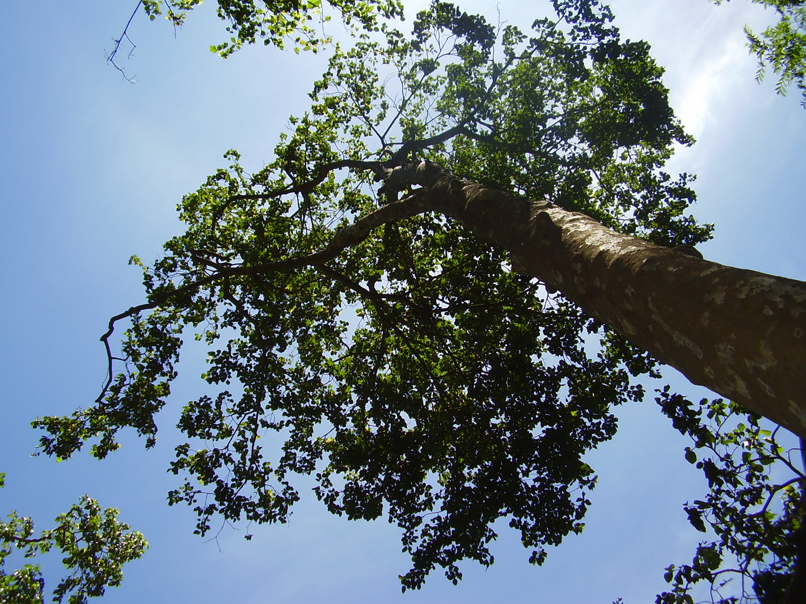 tree top view wallpapers tree top view stock photos