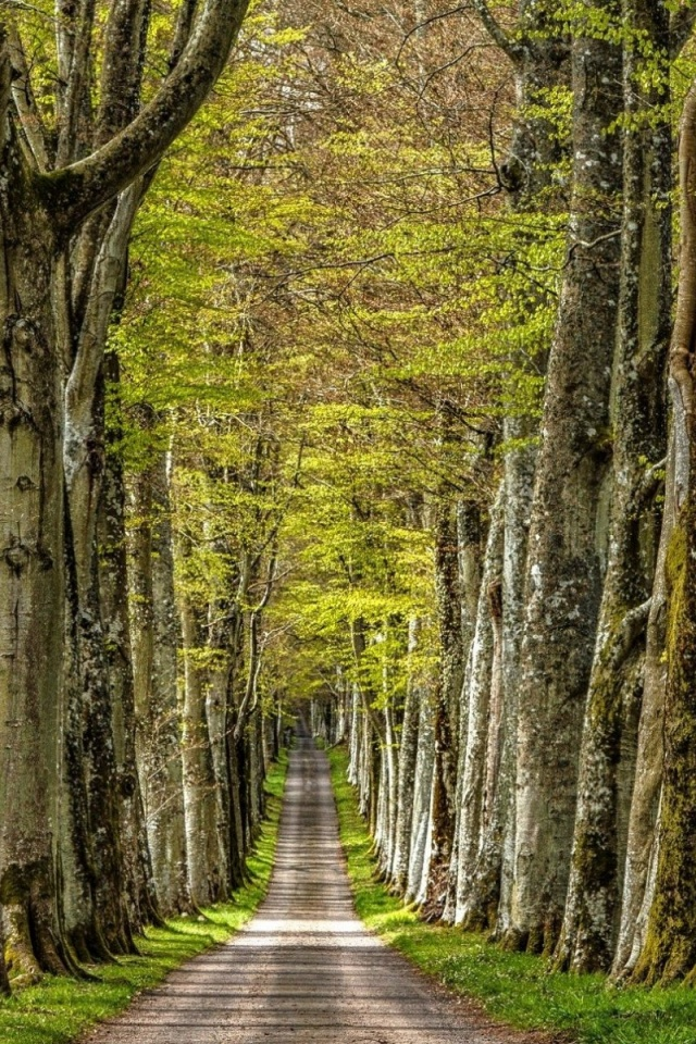 640x960 Trees Alley Steeply Road Iphone 4 Wallpaper