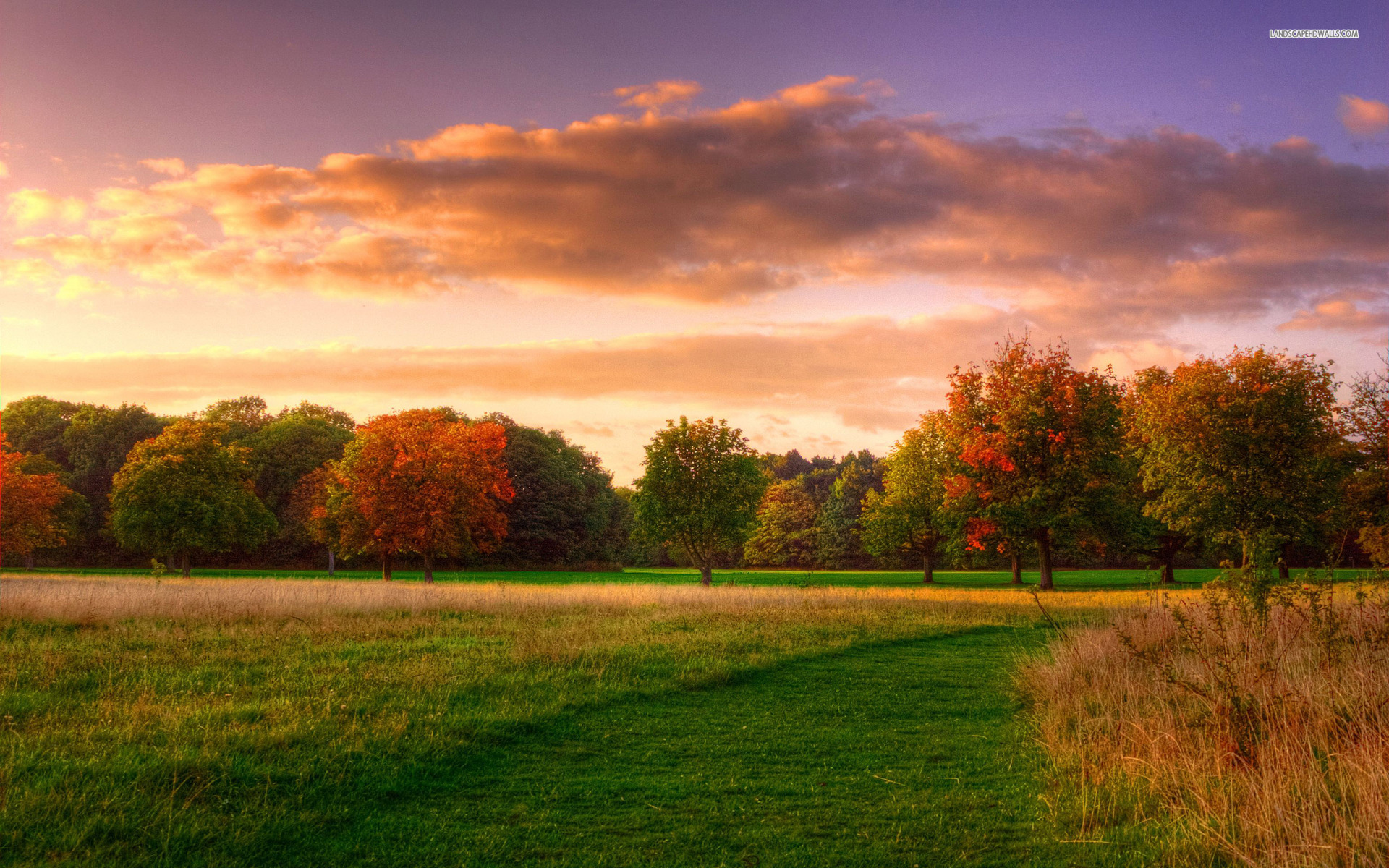 Lake Forest Sports Cars >> Trees Grass Field Cloud Sunset wallpapers | Trees Grass ...