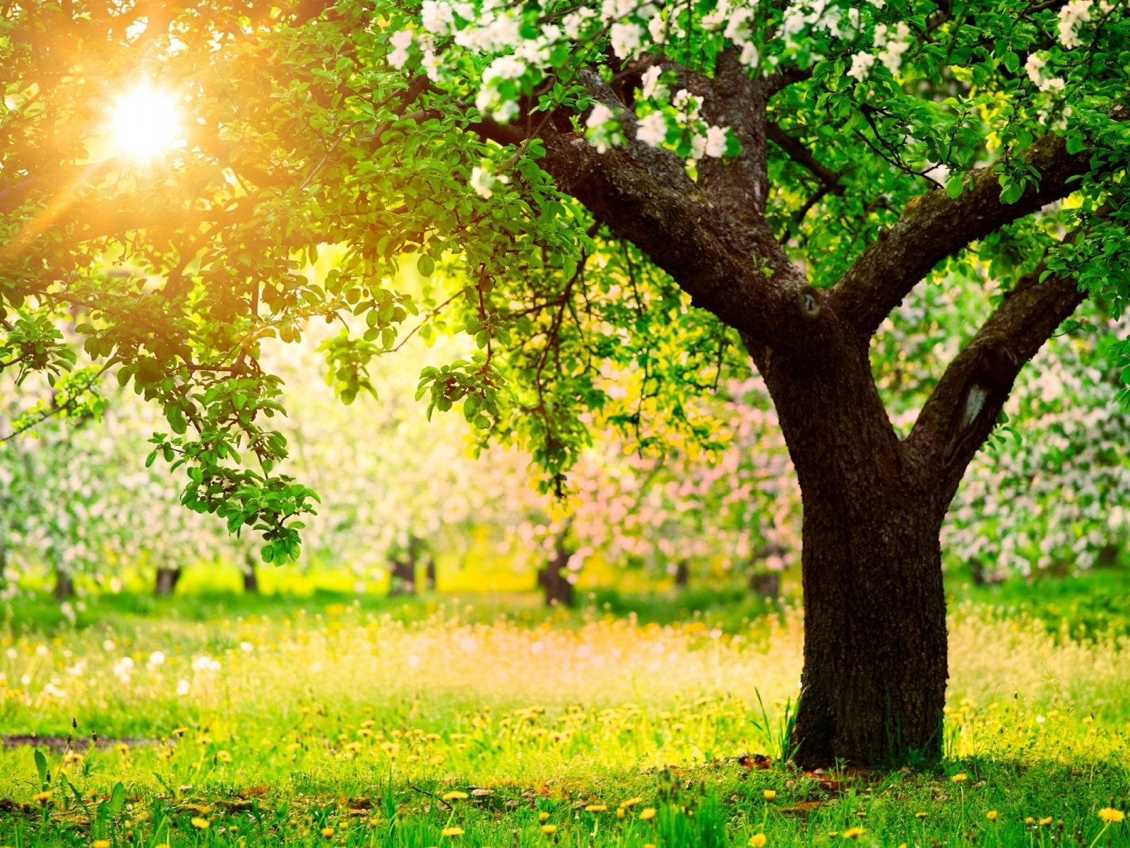 1500x500 Trees Grass Flowers Sunny Day Twitter Header Photo