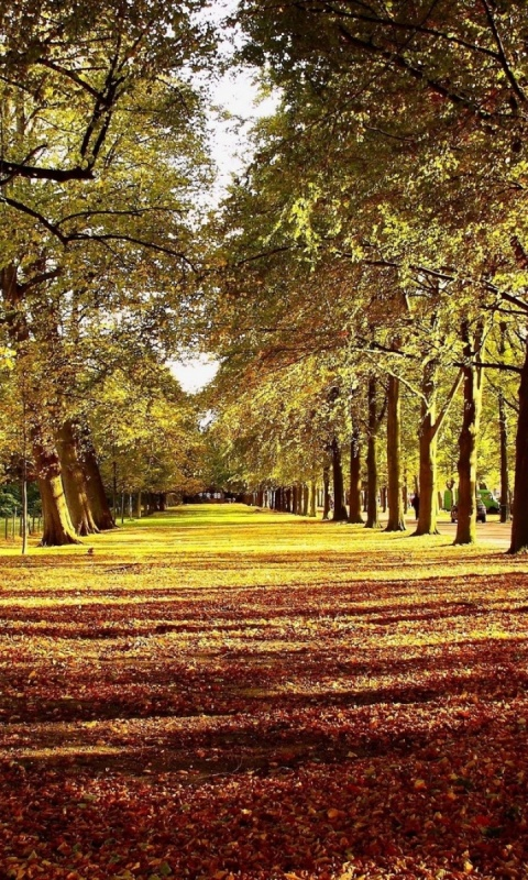 Forest Leaves Carpet Autumn Colors Road Green Red Path Wallpaper