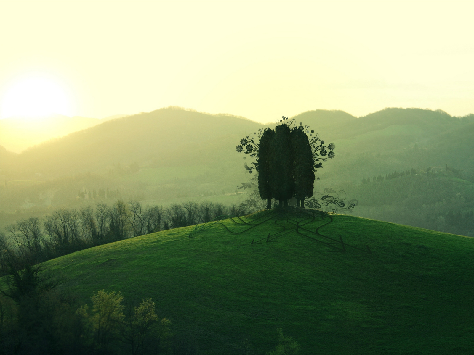 Trees on hill top wallpapers   Trees on hill top stock photos