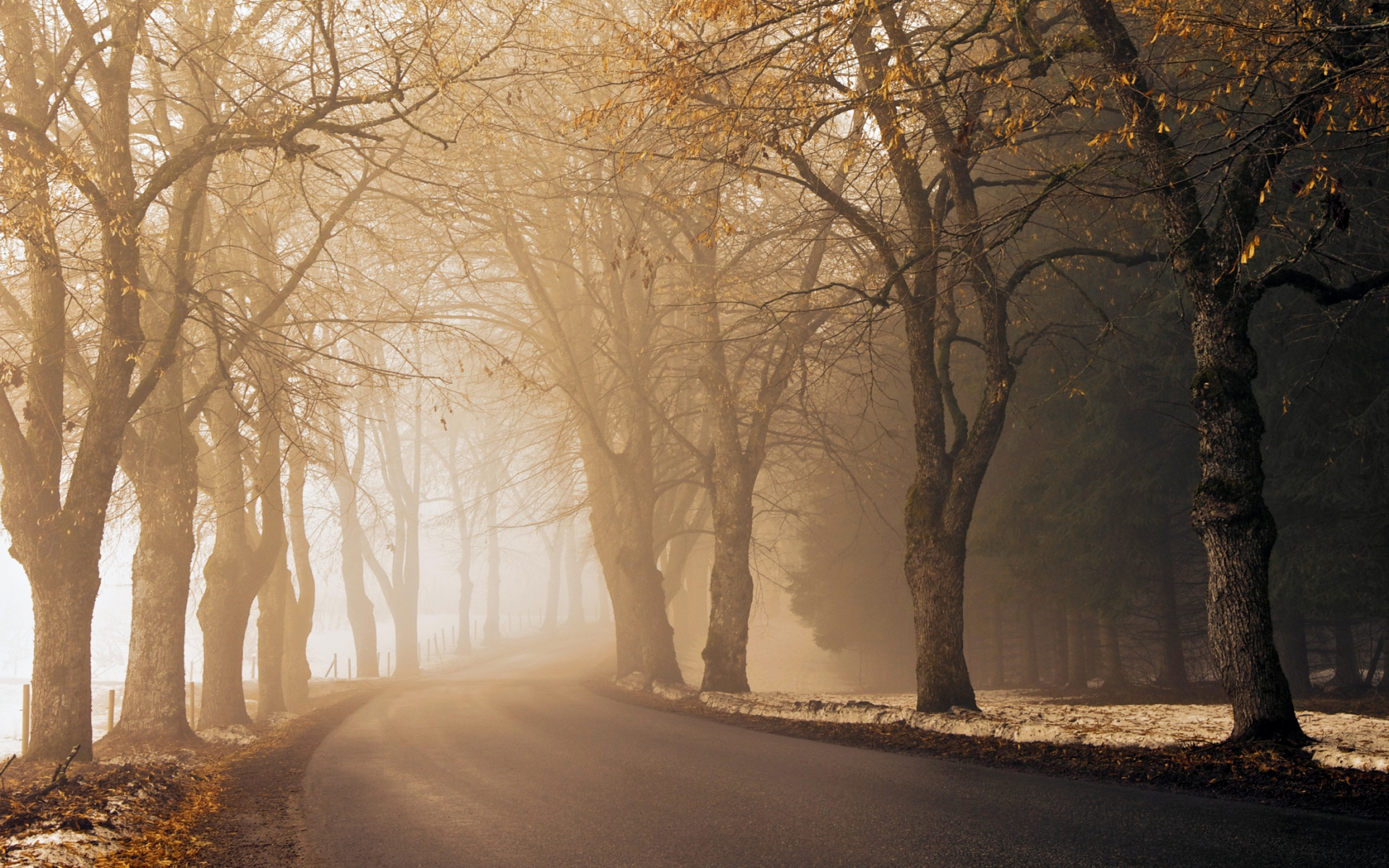 Trees Road Amp Fog Wallpapers Trees Road Amp Fog Stock Photos