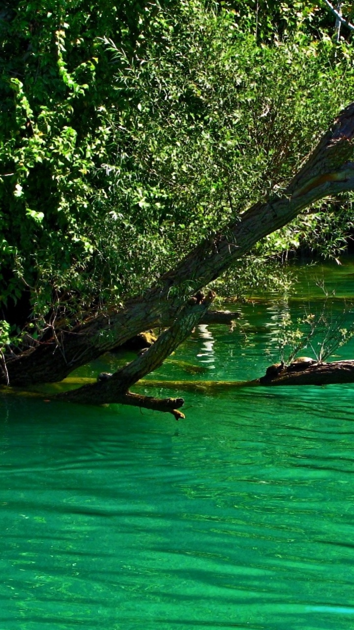 720x1280 Turquoise Lake Twigs & Leaves Htc one x wallpaper