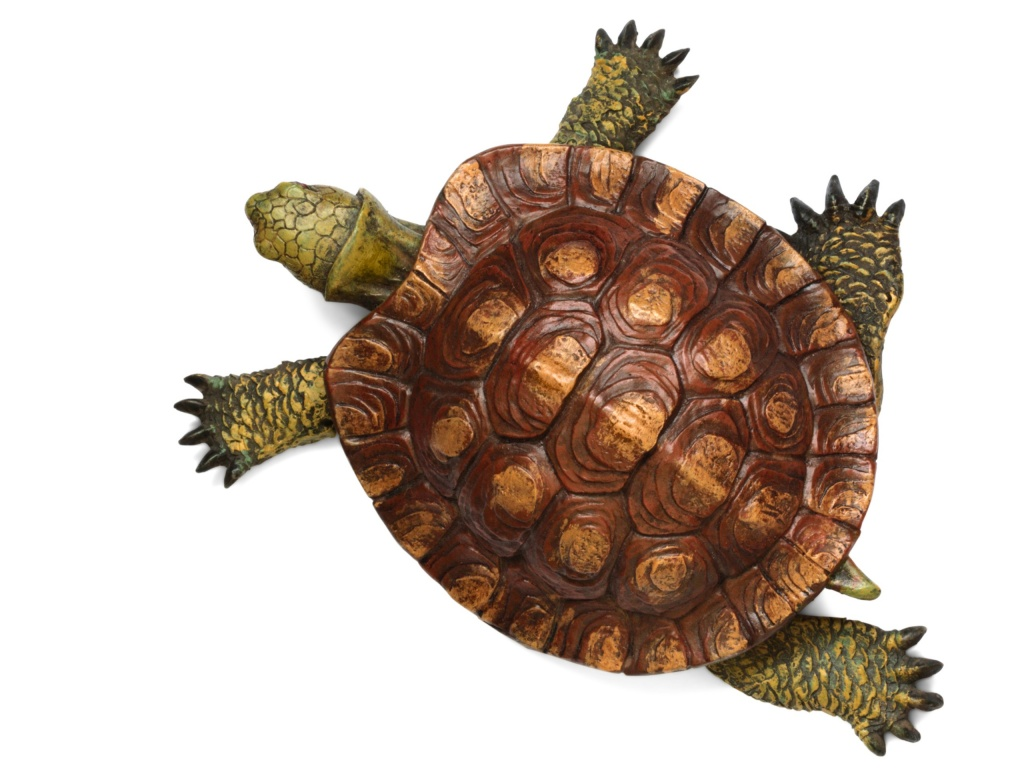 1024x768 Turtle top view