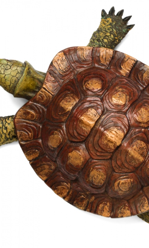 480x800 Turtle top view