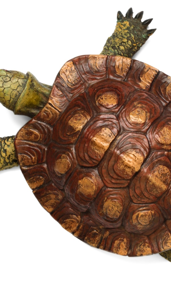 600x1024 Turtle top view