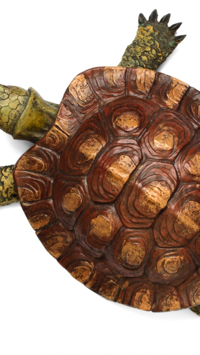 640x1136 Turtle top view