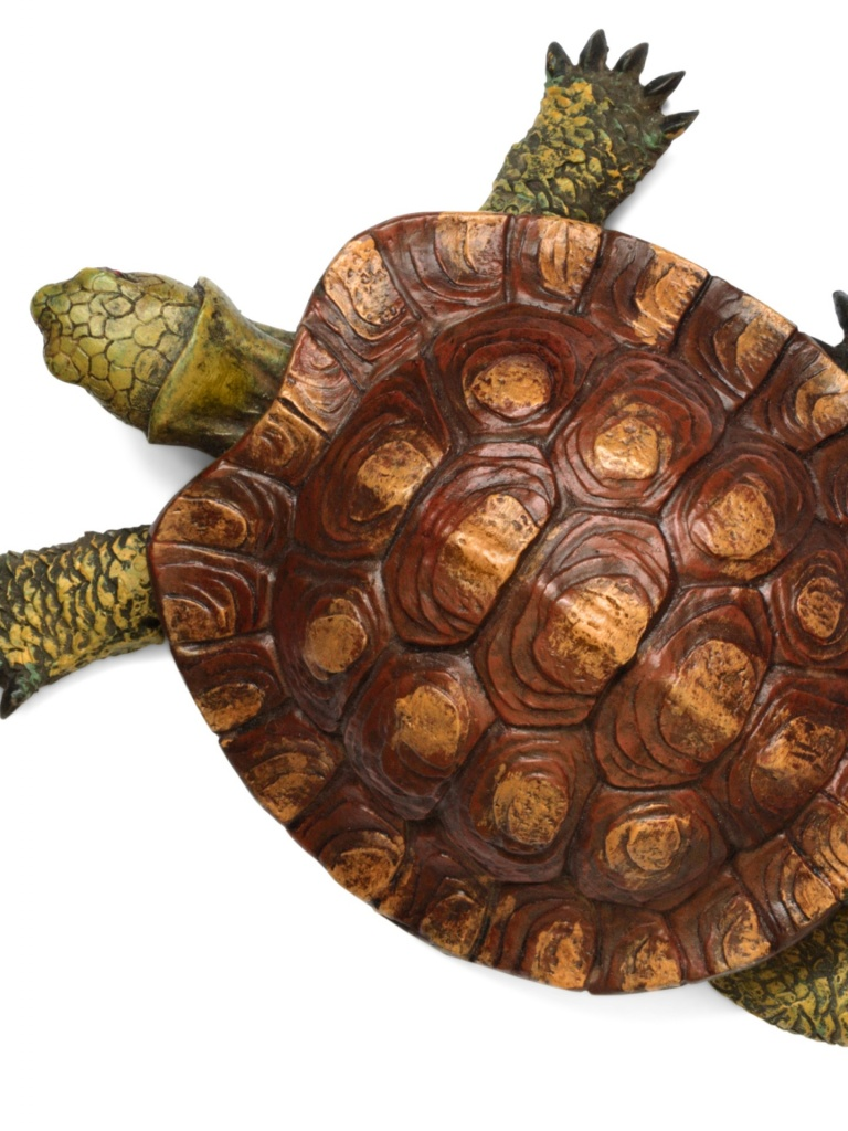 768x1024 Turtle top view