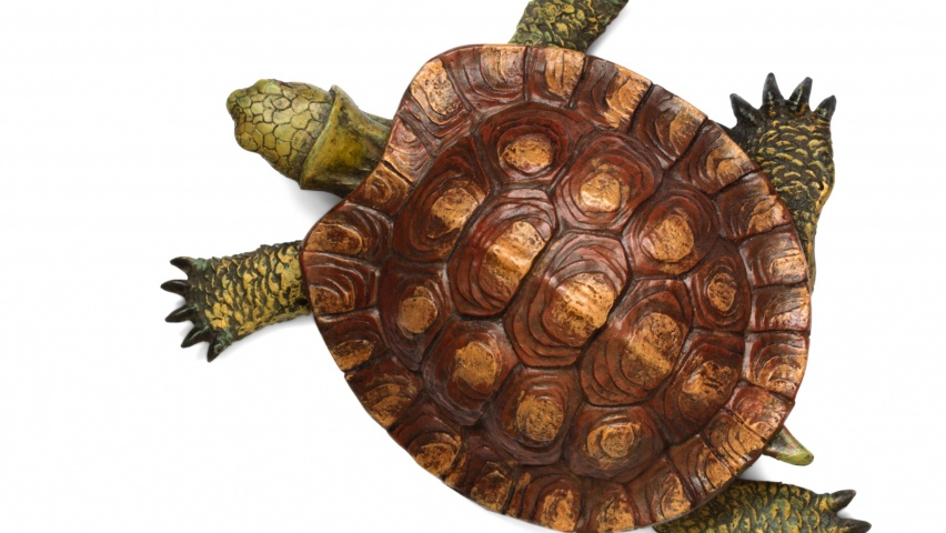 852x480 Turtle top view