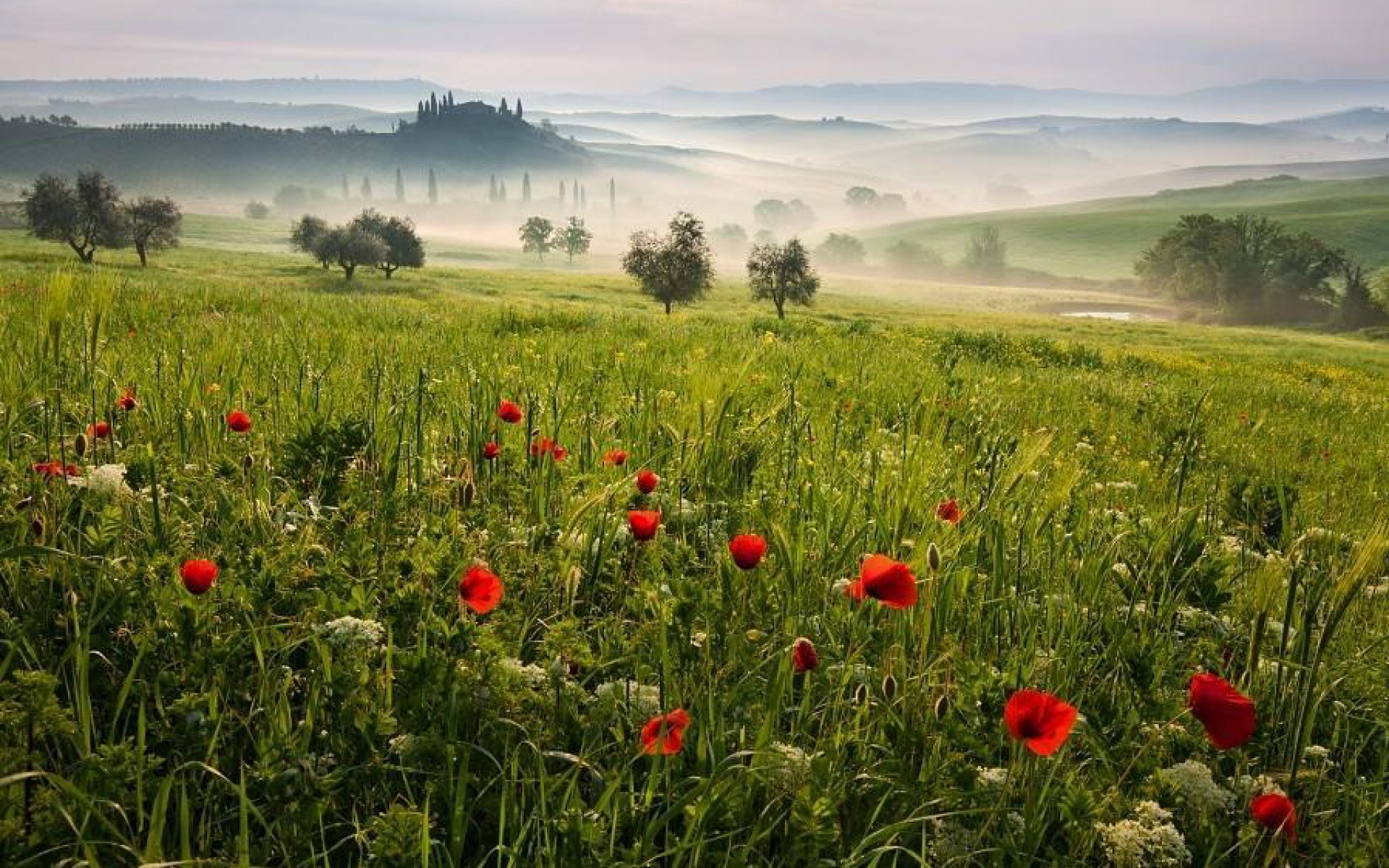 Image Tuscany Meadow Wallpapers And Stock Photos