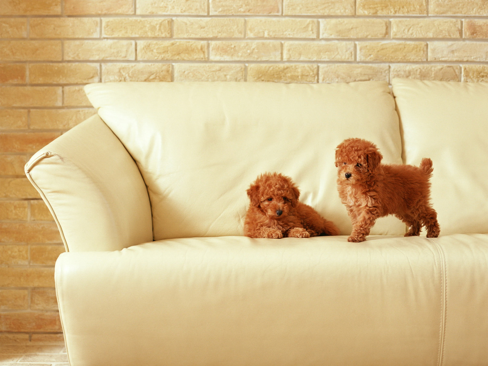 Small Puppies | 1600 x 1200 · 419 kB · jpeg