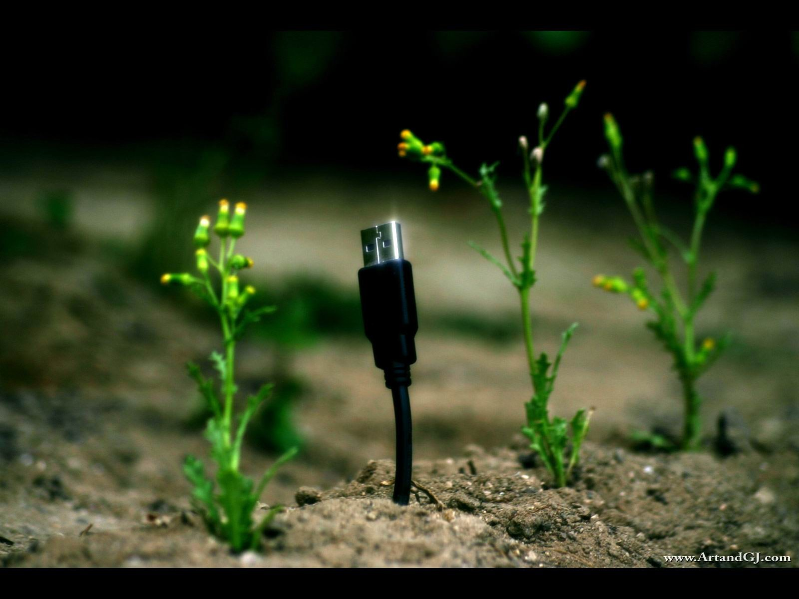 USB Plant Wallpapers And Stock Photos