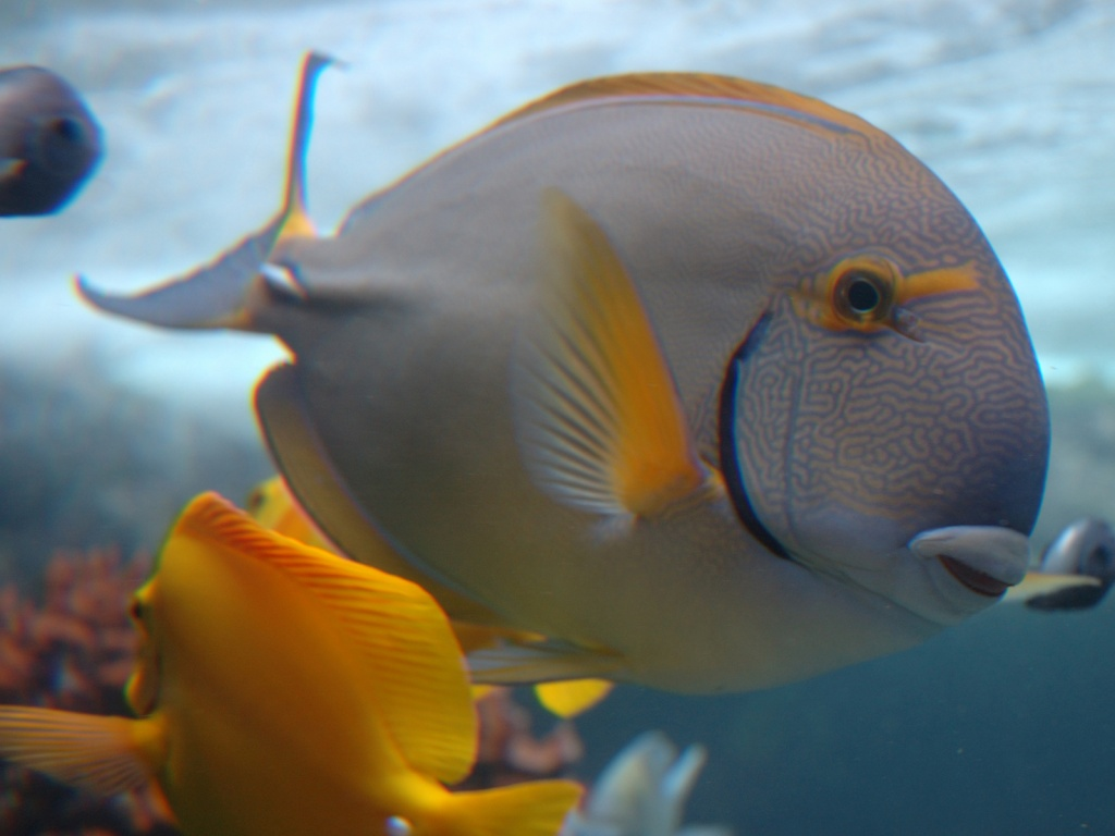1024x768 vista underwater fish desktop pc and mac wallpaper for Mac s fish and chips