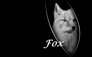 Fox wallpapers and stock photos
