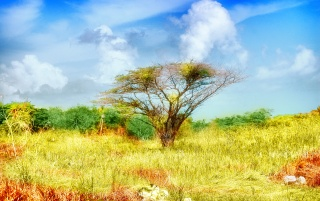 Solitary Tree wallpapers and stock photos