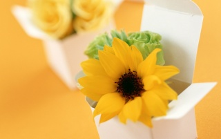 Boxed sunflower wallpapers and stock photos